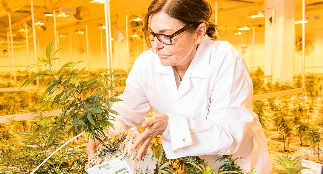 Hemp Farmers Gründerin Sylvia Nowel in der Schweiz im Gewächshaus mit Hanfpflanzen
