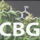 CBG – das Super-CBD